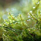 Twinkle Grass by Hetty Mellink