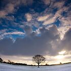 Midwinter Sun by Andrew Leighton