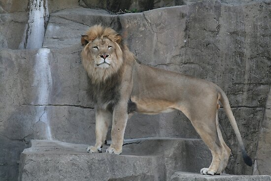 King of the Jungle by Jen Hendricks