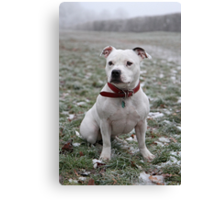 Millie in the Frost 2 Canvas Print