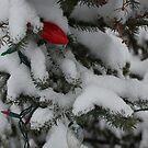 Snowy Pine Tree by Felix721