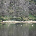 Peaceful nature,American River,Kangaroo Island,S.A. by elphonline