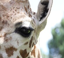The Giraffe's Eye by littlebiggphoto