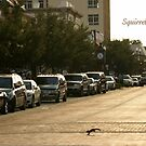 Squirrel Crossing by JpPhotos