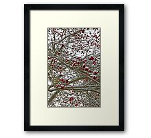 Snow covered tree full of red berries Framed Print