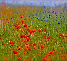 Wonder's of spring feelings. by brown Sugar.  Merry Christmas *** F* Favorites: 24 Views: 930 . Bardzo dziękuję !!! thanks a bunch !!!!  Ole !!!! by © Andrzej Goszcz,M.D. Ph.D