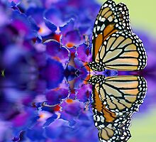 Butterfly Kisses by Diane Schuster