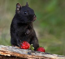 Actually, No ...I Don't Share / Black Eastern Chipmunk by Gary Fairhead