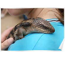 Blue Tongue Lizard Poster