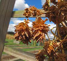 Fall at the Farm by Monnie Ryan