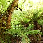 Myrtle Tree, Tarra Bulga National Park, Australia by Michael Boniwell