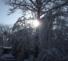 Winter Sun Through the Trees, Gaston South Carolina by Karen L Ramsey