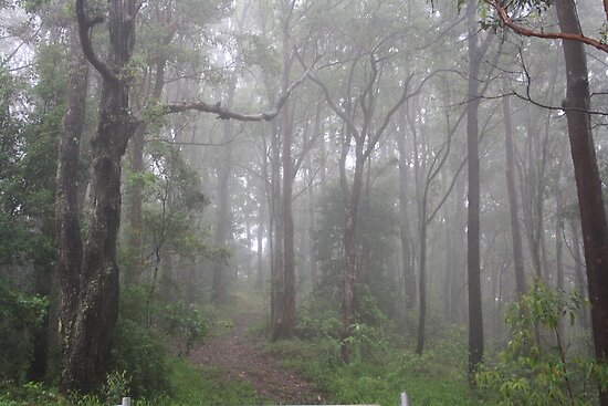 Mist in the Aussie Bush by aussiebushstick