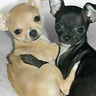&quot;Chummy Chihuahuas&quot; - Looks like Puppy Love by John Hartung