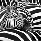 """Stripes"" - Optical Illusion of the stripes on the zebras by John Hartung"