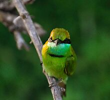Little Green Bee-eater by Hiran Maddumage