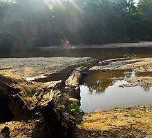 Manik Ganga (River) by Hiran Maddumage