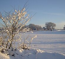 Winter Scene Dalmeny by Doug Cook