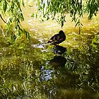 Golden Duck by George Crook