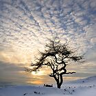 Winter Tree - Roseberry Topping, UK by Ian Snowdon /     www.downtoearthimages.co.uk