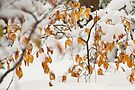 Winter Comes Early: Snowy Beach Leaves. by DonDavisUK
