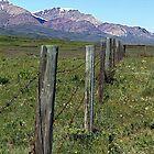 Fenced In  by Jann Ashworth