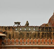 Playful monkeys, Indian temple by Catherine Ames