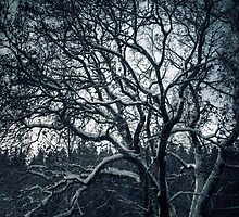 8.12.2010: Winter Tree Dream by Petri Volanen
