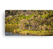 tidal riverscape Canvas Print