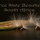 Free State Flowers (South Africa) by Qnita