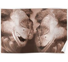 """""""Watering Hole Gossip"""" - Camels gossiping? Poster"""