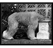 The difficulty with taking dog pictures and choosing names! Photographic Print