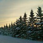 Snowie Pines by Diane Trummer Sullivan