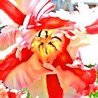 parrot tulip by jashumbert