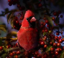 The Cardinal  by Elaine  Manley