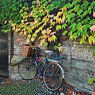 Bicycle in Cambridge by StefanieT