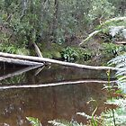 Reflections - North West Tasmania by RainbowWomanTas