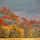 Top Of Autumn by NatureGreeting Cards ccwri
