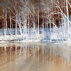 Icy Reflections  by The Creative Minds