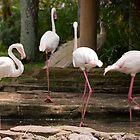 Flamingos by Franky Lie