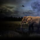 Elephants and Women Never Forget by shall