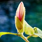 Bourgeoning Bud by nadinecreates