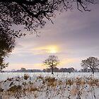 December Sun by Andrew Leighton