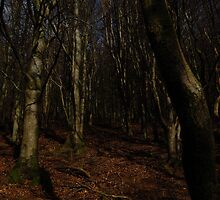 Into the trees - great dodd forest by angie coulston