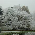 Frosty by Meladana