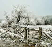 Frosty Gate, Formby by Tarrby