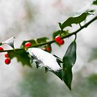 """Berries"" Christmas Card by Adam Lack"