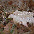 Morning Dew by kellyrutkowski