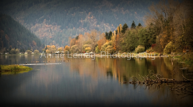 Resting Ducks in the Fall by Annie Lemay  Photography