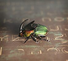 Horned Scarab by Mark Weaver